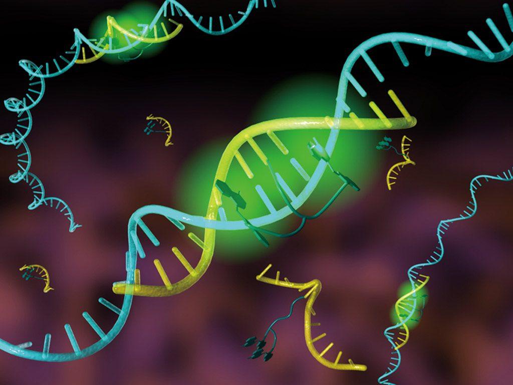 DNAfluo